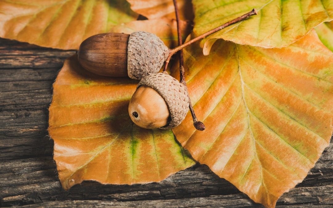 Six tips for successful PR and a bit about acorns