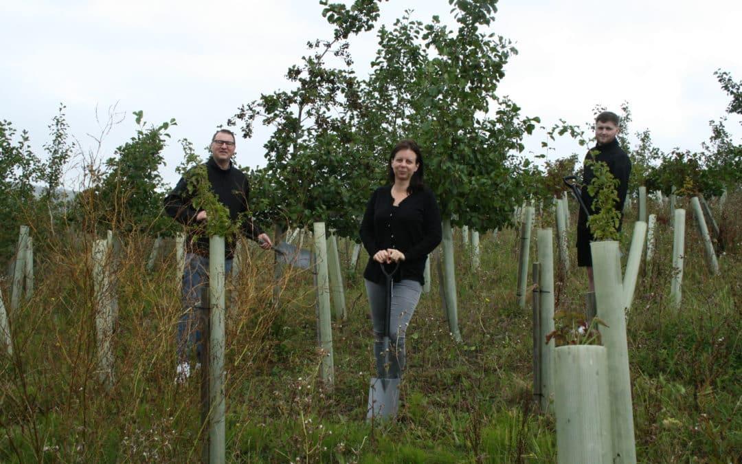 Door drop company goes green with tree-planting scheme