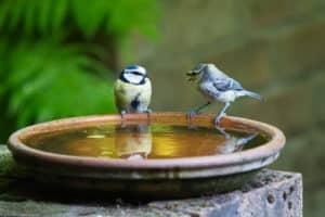 Two birds drinking